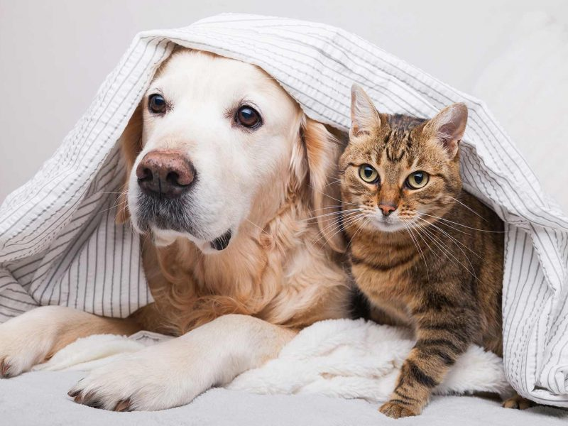 toilettage-canin-felin-opt